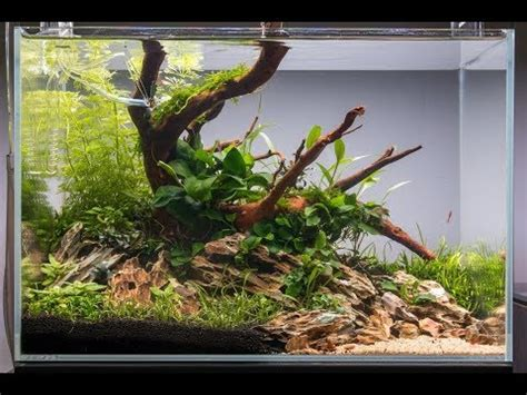 How To Set Up An Aquascape by Non Co2 Aquascape Tutorial How To Set Up An Easy Low