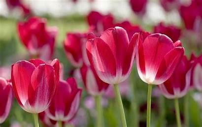 Screensavers Spring Wallpapers Bing Screensaver Desktop Flowers