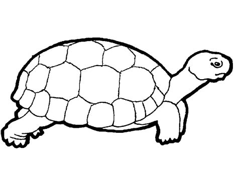 Coloring Turtle by Free Printable Turtle Coloring Pages For Turtles
