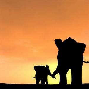 Baby and Parent Elephants silhouette | Elephants | Pinterest
