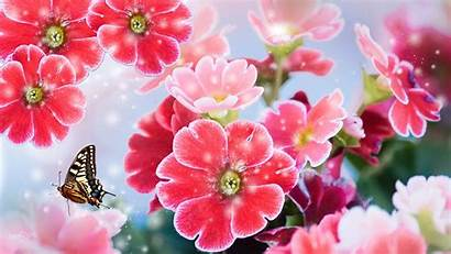 Spring Fun Bright Flower Floral Background Summer
