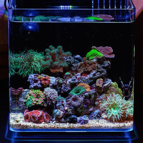 Nano Reef Lighting by Teenyreef 2015 Featured Aquariums Featured Aquariums