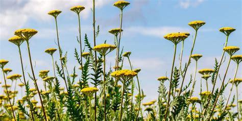 Anspruchslose Garten Pflanzen by Bunter Garten Trotz Hitze Diese Pflanzen Trotzen Der
