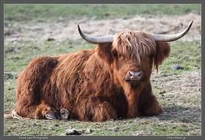 Cute Bull