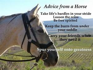 50+ Best Horse ... Free Horses Quotes