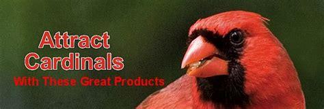 northern cardinal habits   eat   nest