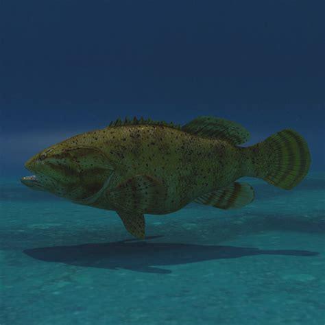 goliath grouper hq max