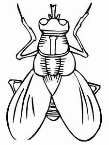 Flies - Free Colouring Pages