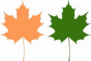 Maple leaves Free Vector / 4Vector