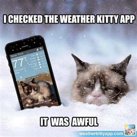 Tardar Sauce Meme - 380 best images about grumpy cat tardar sauce on pinterest memes humor grumpy cat quotes and