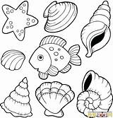 Coloring Shell Pages Clam Shells Sea Seashells Printable Beach Seashell Clipart Sheets Template Oyster Adults Templates Getdrawings Getcolorings Výsledek Pro sketch template