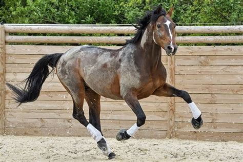 horse horses fast run different speed breeds speeds many things incredible