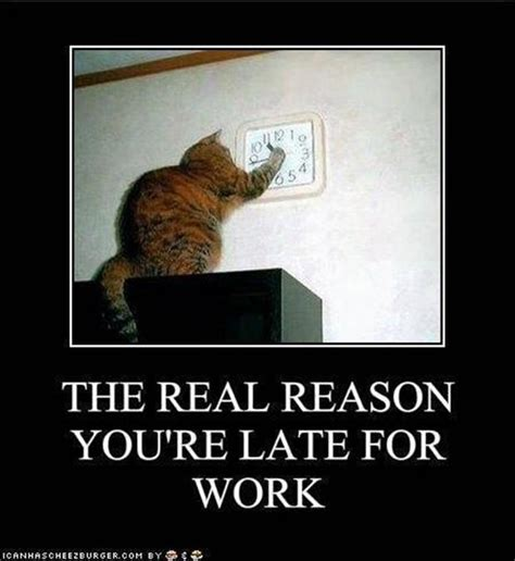 Funny Everyday Memes - the real reason you are late for work everyday funny cats dump a day
