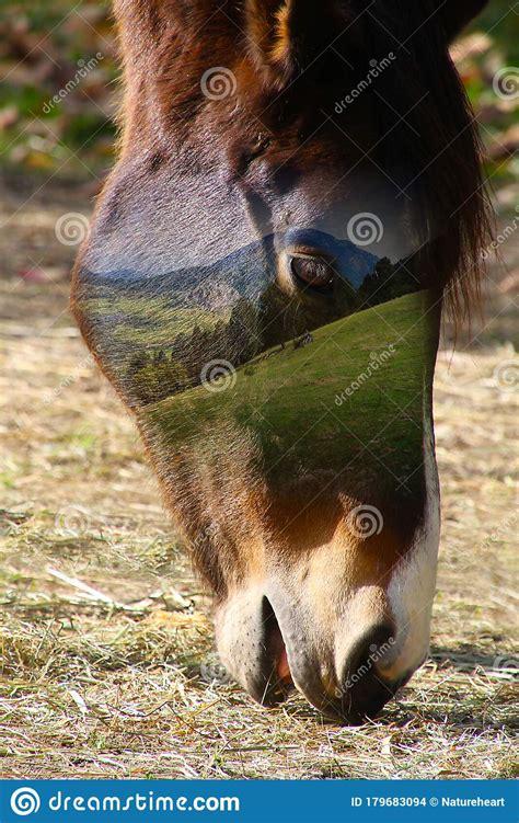 horse toed ungulate odd field scene head close brown face