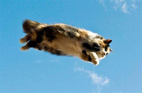imagenes demuestran  los gatos pueden volar