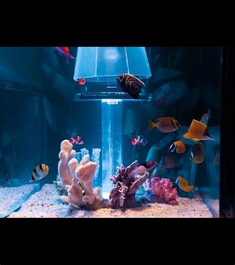 photo rempli d environ 2460 litres d eau de mer ces aquariums accueillent une v 233 ritable faune