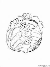 Cabbage Coloring Pages Printable Sprout Drawing Vegetables Brussel Fruits sketch template