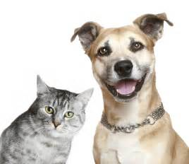 dogs and cats can cats and dogs be friends