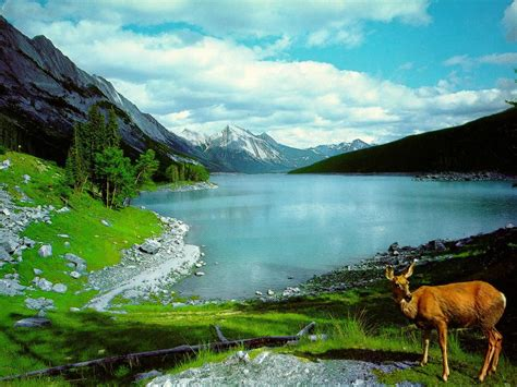 Nature Wallpaper Most Beautiful Cool Photos by Nature Images Beautiful Cool Wallpapers