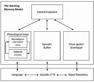 1, A, Schematic, Model, Of, The, Working, Memory, Model, Derived, From