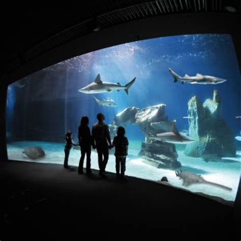 aquarium de genes tarif acuario visitgenoa it