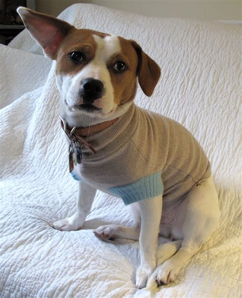 doge sweater resweater tutorial tuesday easy sweater