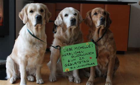 appetitanreger für hunde gl 252 ckw 252 nsche zum geburtstag hund alles liebe