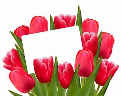 Tulips Clipart Transparent Decoration March