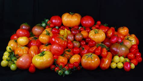 heirloom tomatoes a day s heirloom tomato harvest diamond polishing pinterest