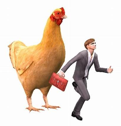 Chicken Animated Rooster Gifs Chickens Birds Animals