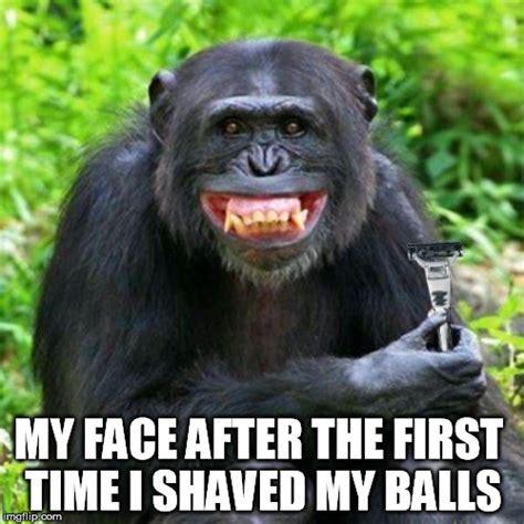 Meme Monkey - image gallery monkey balls meme