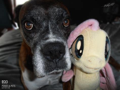 ponies pets pony