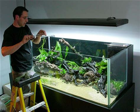 Diy Aquascape by 1000 Images About Aquarium Design And Fish On