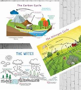 Printable Chemistry Cycles Posters  Carbon Cycle  Nitrogen