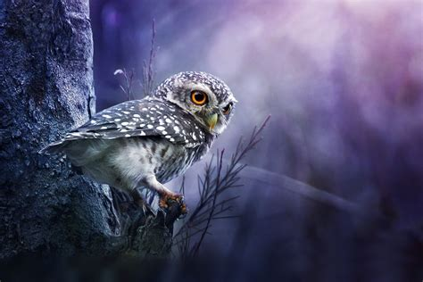 Background Owl Wallpapers by Owl Wallpaper And Background Image 1900x1267 Id 338208