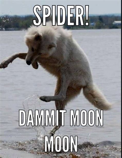 Moon Meme - 109 best images about moon moon on pinterest jokes a meme and werewolf name