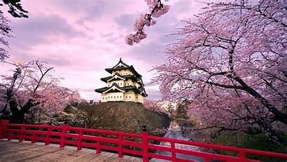 Cherry Blossom Japanese Japan Blossoms Wallpapersafari