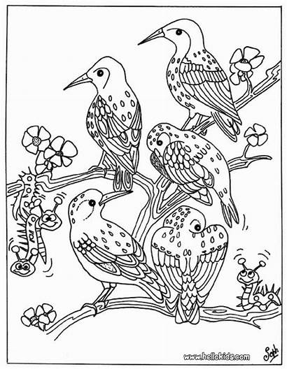 Coloring Bird Pages Wild Printable Getcolorings