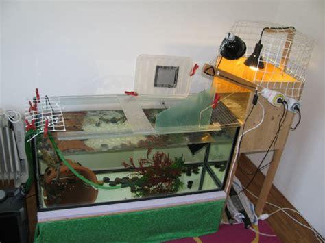 mon aquarium avec plage de ponte lauraingalls