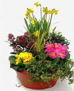 Pflanzen Für Innen : pflanzen set f r schale und k bel pflanzen versand harro ~ Michelbontemps.com Haus und Dekorationen