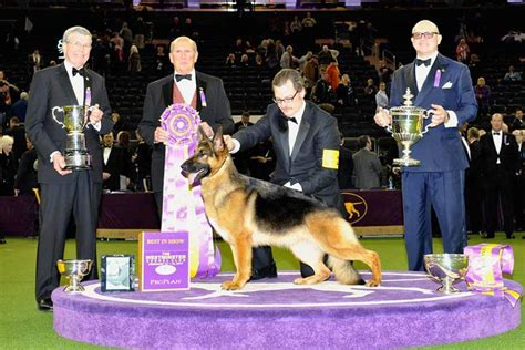 The Past 11 Best In Show Winners