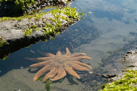 Tropical Shore Split With Sea Stars Underwater Stock Image
