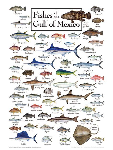 gulf mexico louisiana fish fishing reef deep water found venice limits 1300ft dept