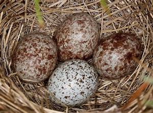 Sparrow's Eggs. Check out Gable's review of Mary Norton's ...