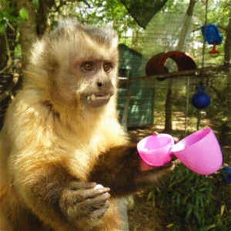 monkeys easter egg hunt animal stories