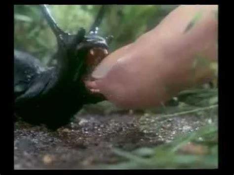 slugs  trailer deutsch youtube