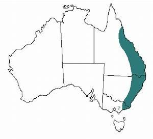Distribution Of The Australian Paralysis Tick  Ixodes