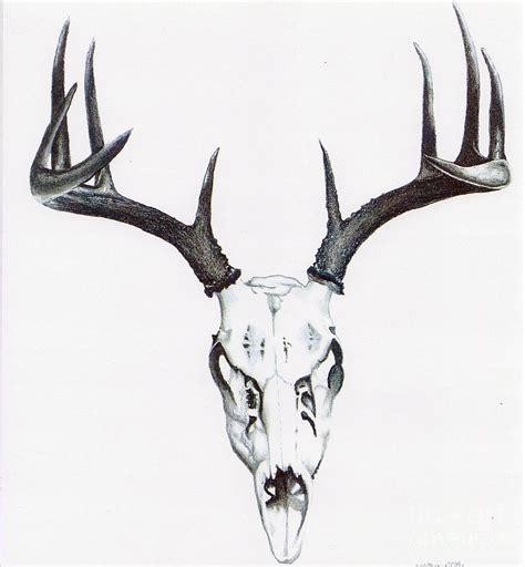 Whitetail Skull Drawing Elizabeth Moug