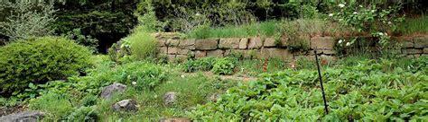 Botanischer Garten Witten by Die Allochthone Kolonie Der Mauereidechsen Im Botanischen