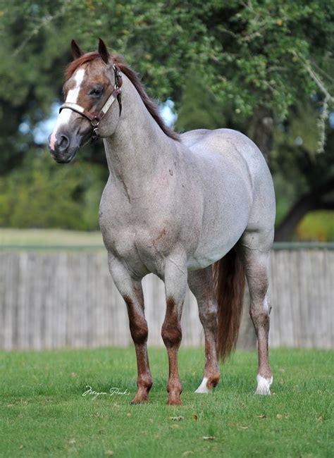 quarter horses boon ranch king foundation peptoboonsmal sorrel san